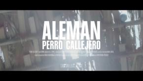 Aleman Perro Callejero